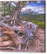 Rustic Roots Canvas Print