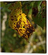 Rusty Leaf Canvas Print