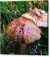 Rusty Mushroom Canvas Print