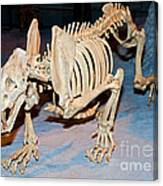 Saber-toothed Cat Canvas Print