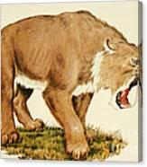 Sabretooth Cat Canvas Print
