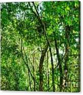 Sacred African Rainforest Canvas Print