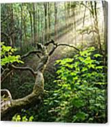 Sacred Grove Canvas Print