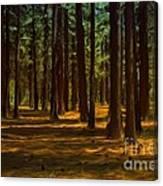 Sacred Warrior Grove Canvas Print