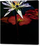 Sacred Water Lilies Canvas Print