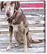 Sad Face Dog On Bleachers Canvas Print
