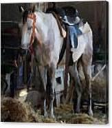 Sad Horse Canvas Print