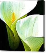 Sad Lillies Canvas Print