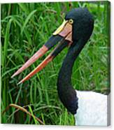Saddle Billed Stork-00139 Canvas Print