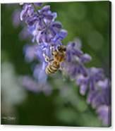 Sage Bee Canvas Print