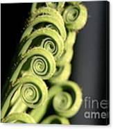 Sago Palm Leaf - 3 Canvas Print