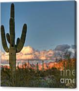 Saguaro At Sunset Canvas Print