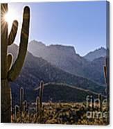 Saguaro Cacti And Catalina Mountains Canvas Print