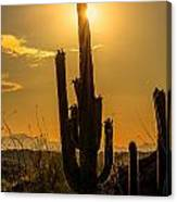 Saguaro Cactus 3 Canvas Print