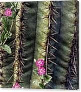 Saguaro Cactus And Wildflowers Canvas Print