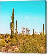 Saguaro Cactus In Organ Pipe Monument Canvas Print