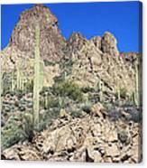 Saguaro On The Apache Trail Canvas Print