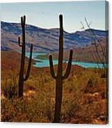 Saguaros In Arizona Canvas Print