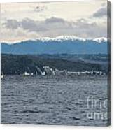 Sailing Lake Taupo Canvas Print
