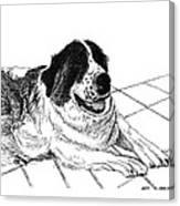 Saint Bernard Bailey Canvas Print