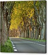 Saint Remy Trees Canvas Print