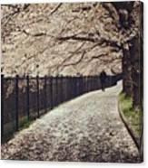 Sakura カーペット🌸 Canvas Print
