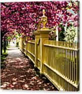 Salem Walkway Shrouded By Spring Flowers Canvas Print