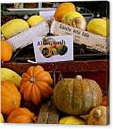 San Joaquin Valley Squash Display Canvas Print