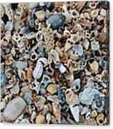 Sallie's Sea Shells Canvas Print