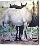 Sally's Horses Canvas Print