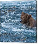 Salmon Salmon Everywhere Canvas Print