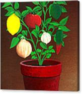 Salsa Plant Canvas Print