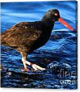 Salt Creek Catcher Canvas Print