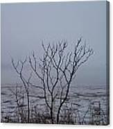 Salt Marsh Submerged In Fog Canvas Print
