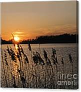 Salt Marsh Sunset Canvas Print
