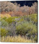Salt River Spring Canvas Print