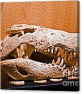 Salt Water Crocodile Skull Canvas Print