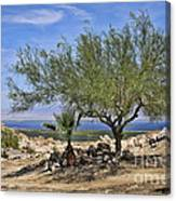 Salton Sea Oasis Canvas Print