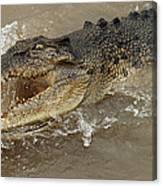 Saltwater Crocodile Canvas Print