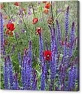 Salvia Sp. And Papaver Sp Canvas Print