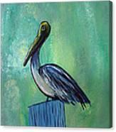 Sam The Pelican Canvas Print