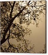 Saman In The Sky Canvas Print