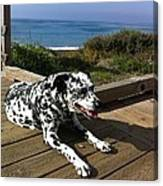 Samdog At The Beach Canvas Print