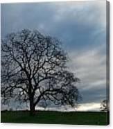 Same Tree Many Skies 10 Canvas Print
