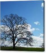 Same Tree Many Skies 11 Canvas Print