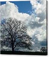 Same Tree Many Skies 13 Canvas Print