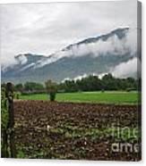 San Comino Valley Vines Canvas Print