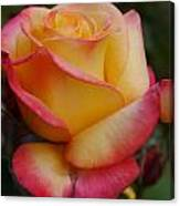 San Francisco Rose Garden Rose Canvas Print