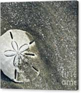 Sand Dollar On Boneyard Beach Canvas Print