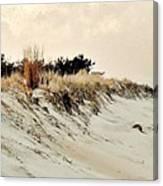 Sand Dunes At Penny Beach Canvas Print